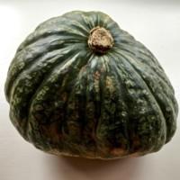 JamaicanPumpkin.jpg