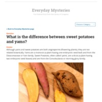 What is the difference between sweet potatoes and yams.pdf